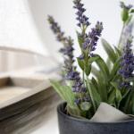 38ChurchSt-lavender